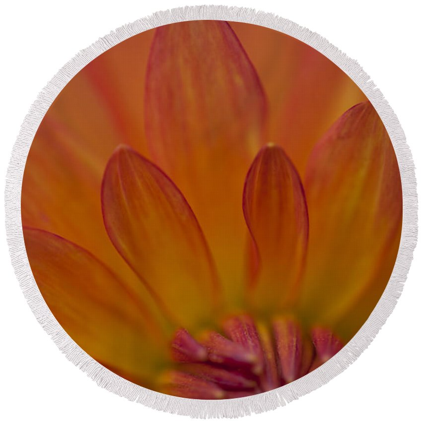 Heiko Round Beach Towel featuring the photograph Dahlia Closeup by Heiko Koehrer-Wagner