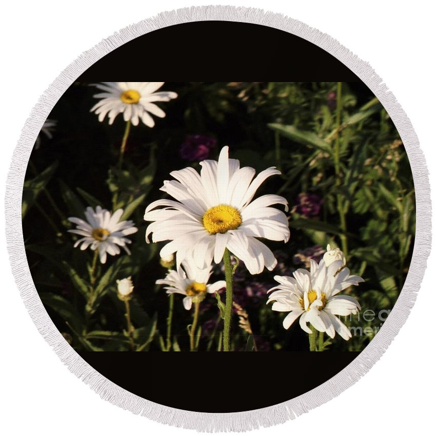 White Round Beach Towel featuring the photograph Daisy by Brandi Maher