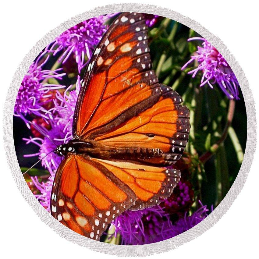 Monarch Butterfly Round Beach Towel featuring the photograph Danaus Plexippus by Cynthia Wallentine