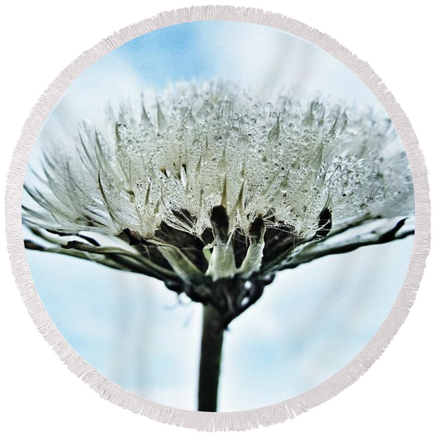 Raindrops Round Beach Towel featuring the photograph Dandelion After Rain by Marianna Mills