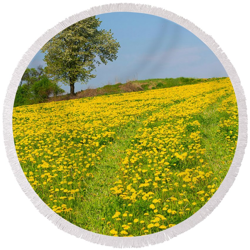 Agriculture Round Beach Towel featuring the photograph Dandelion Meadow And Alone Tree by Jaroslav Frank