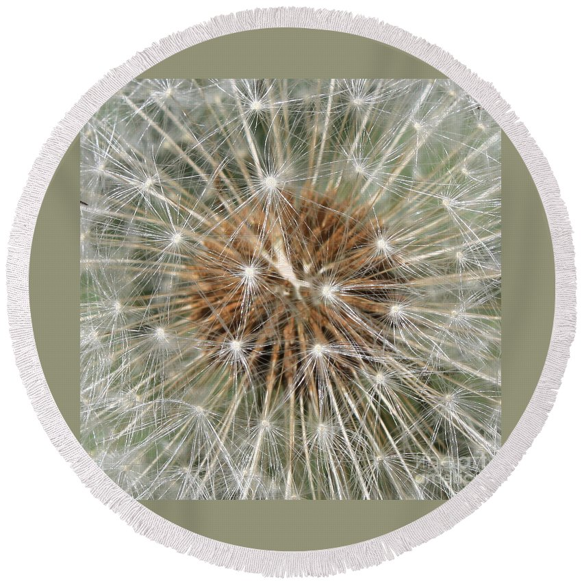 Dandelion Round Beach Towel featuring the photograph Dandelion Square by Carol Groenen
