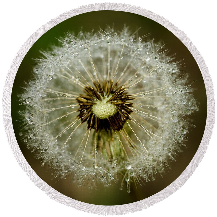 Background Round Beach Towel featuring the photograph Dandelion by TouTouke A Y