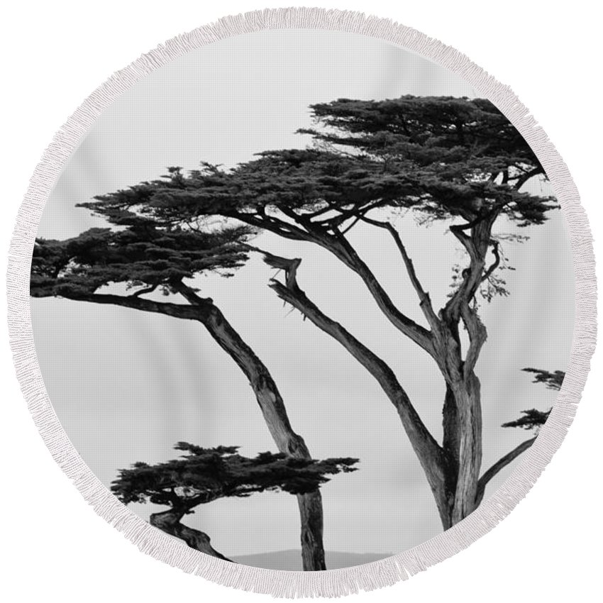 2012 Round Beach Towel featuring the photograph Dark Cypress by Melinda Ledsome