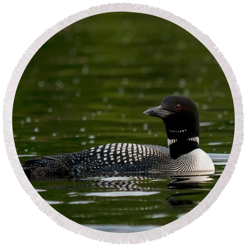 Loon Round Beach Towel featuring the photograph Dark Loon by Cheryl Baxter