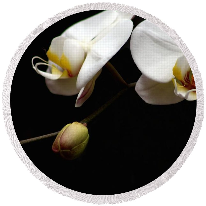Phalaenopsis Orchid Round Beach Towel featuring the photograph Dark Orchid by Carol Montoya