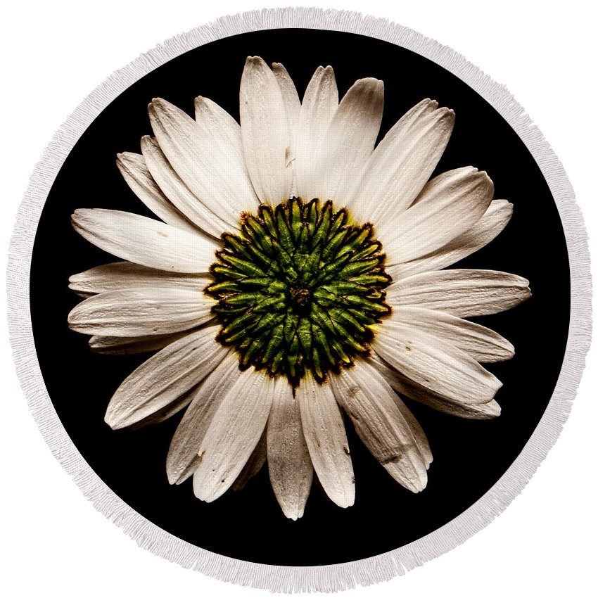 Daisy Round Beach Towel featuring the photograph Dark Side Of A Daisy Square by Weston Westmoreland