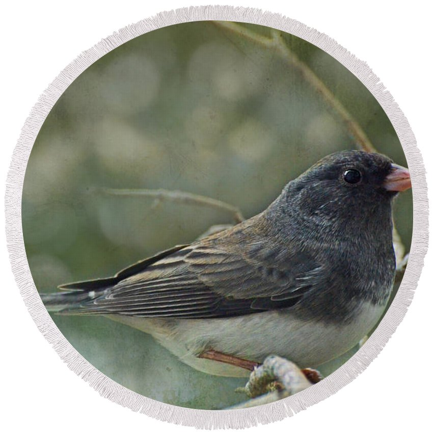 Nature Round Beach Towel featuring the photograph Darkeyed Junco by Debbie Portwood