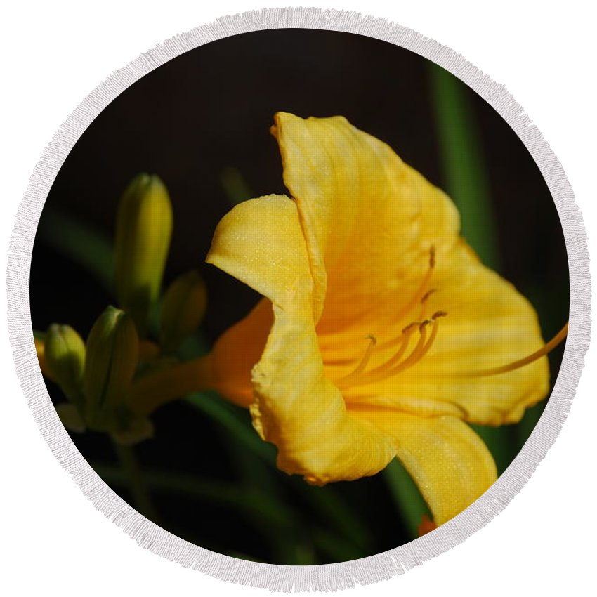 Day Lily Round Beach Towel featuring the photograph Day Lily by Todd and Ashleigh Madsen