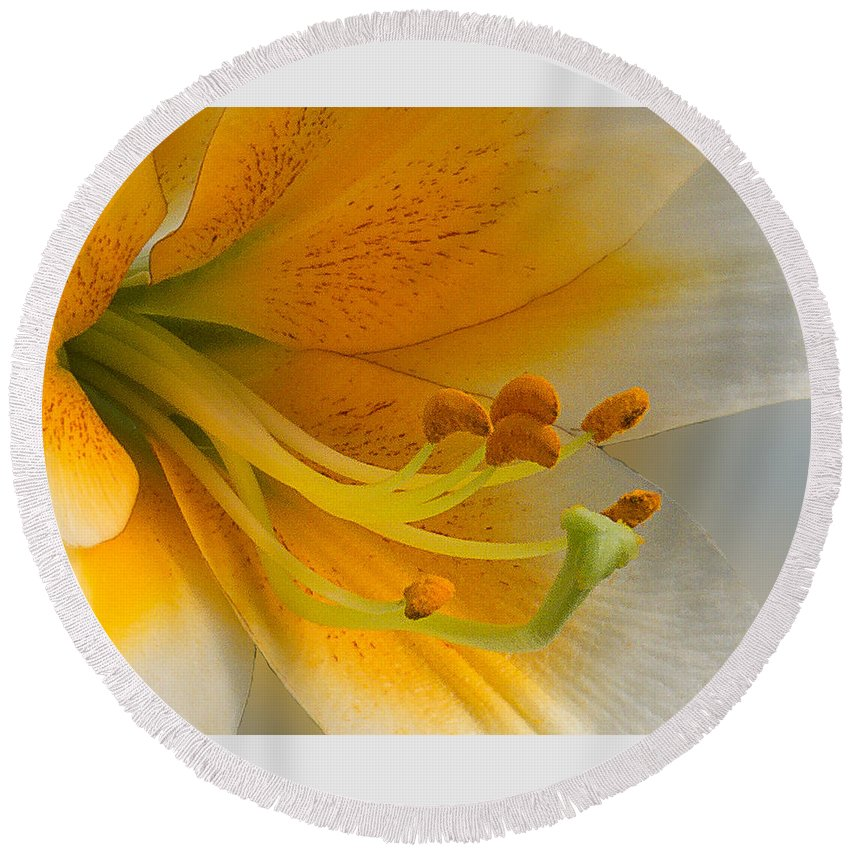 Macro Round Beach Towel featuring the photograph Gold Daylily Close-up by Patti Deters