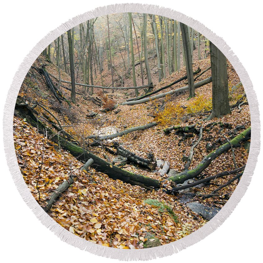 Forest Round Beach Towel featuring the photograph Deciduous Forest With Ravines by Michal Boubin