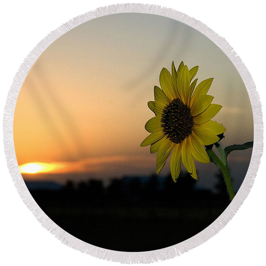 Sunflower And Sunset Round Beach Towel featuring the photograph Sunflower And Sunset by Mae Wertz