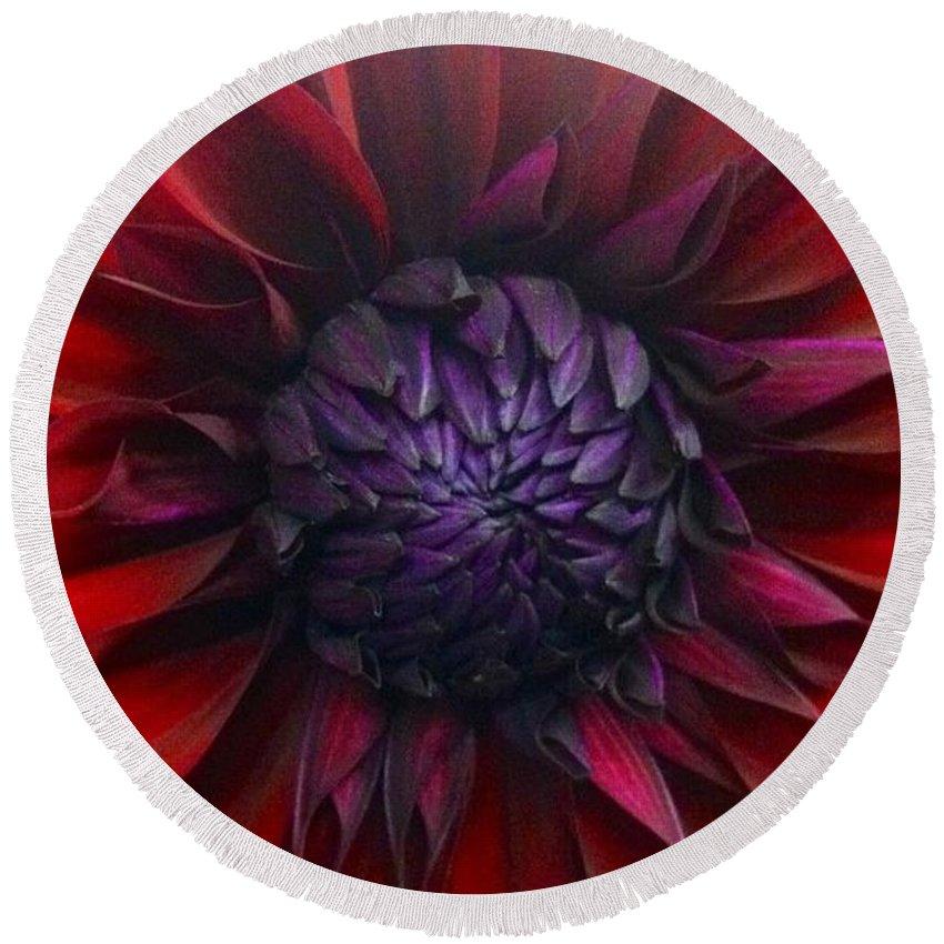 Dahlia Round Beach Towel featuring the photograph Deep Red To Purple Dahlia Flower by Susan Garren