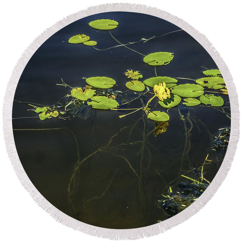 Lilly Pad Round Beach Towel featuring the photograph Deep Roots by Dale Powell