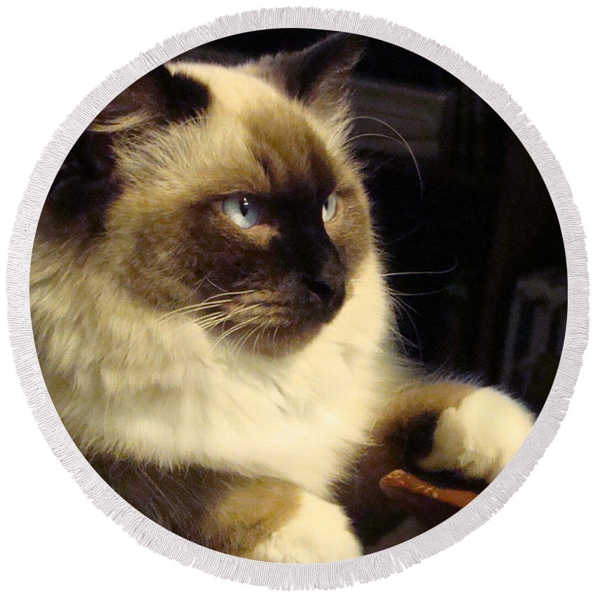 Ragdoll Round Beach Towel featuring the photograph Deep Thought by Nancy L Marshall