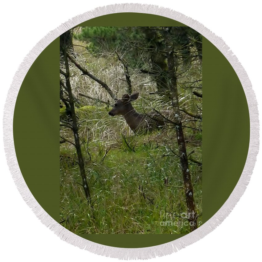 Deer Round Beach Towel featuring the photograph Deer In The Forest by Susan Garren