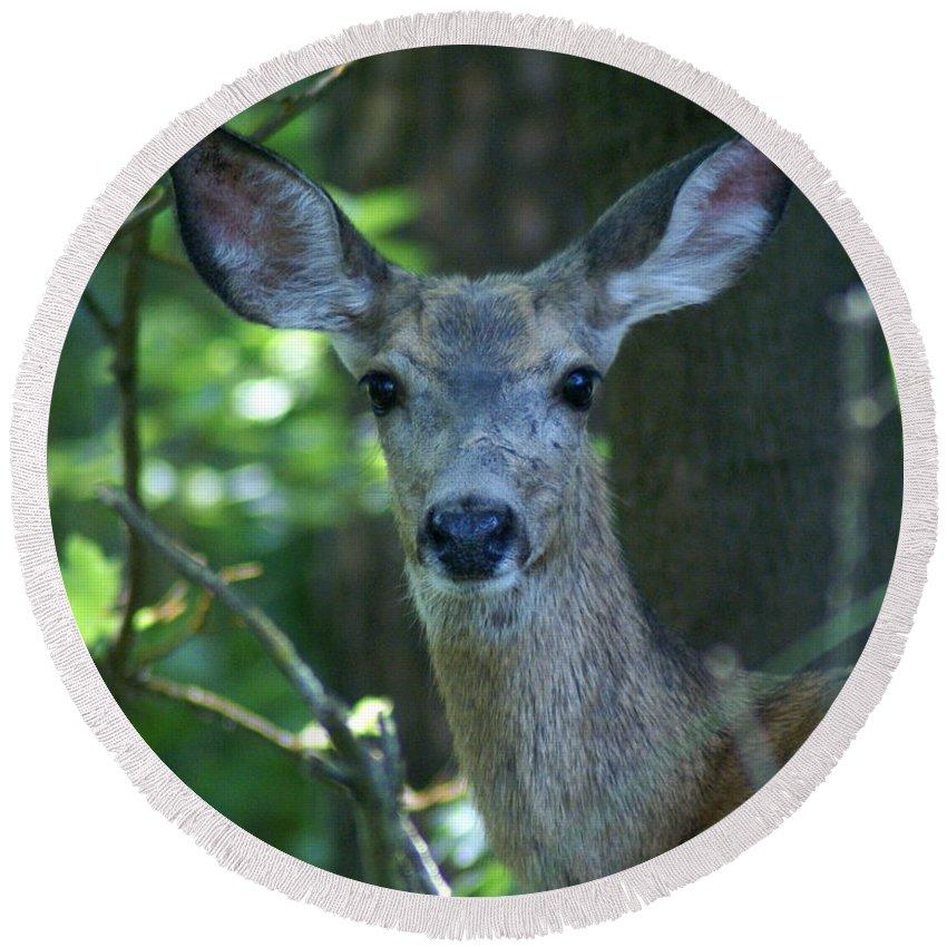 Spokane Round Beach Towel featuring the photograph Deer In The Woods by Ben Upham III
