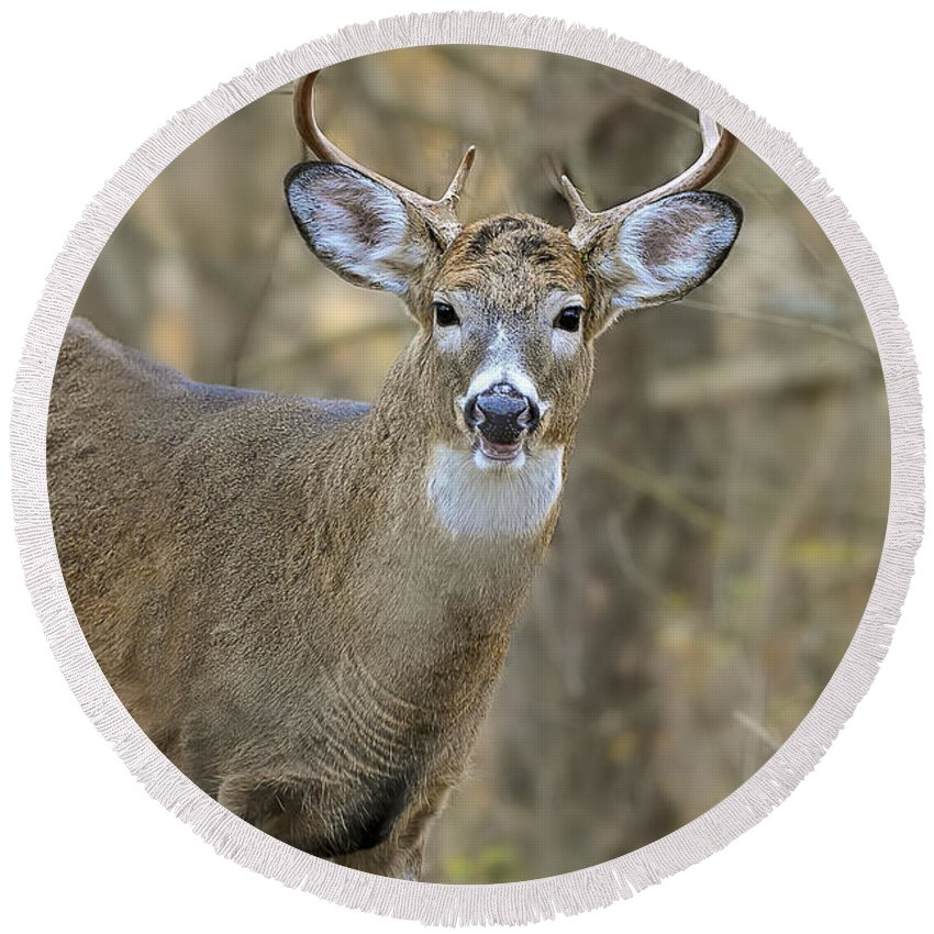 White-tailed Deer Round Beach Towel featuring the photograph Deer Pictures 445 by World Wildlife Photography