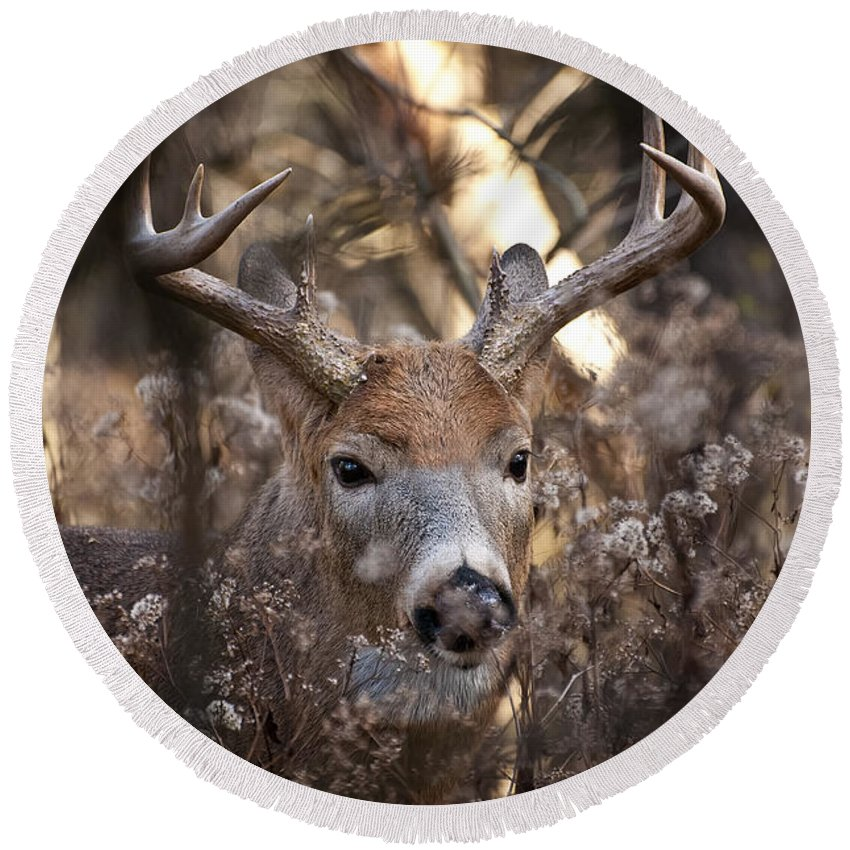 White-tailed Deer Round Beach Towel featuring the photograph Deer Pictures 449 by World Wildlife Photography
