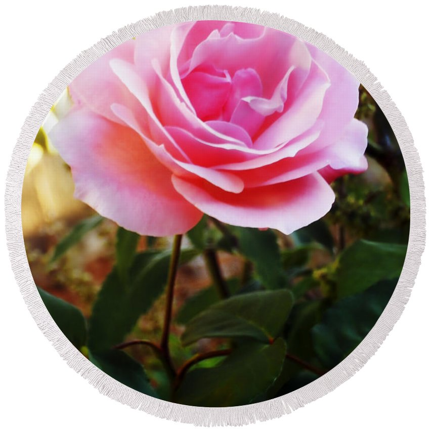 Rose Round Beach Towel featuring the photograph Delicacy Of Life by Lyriel Lyra
