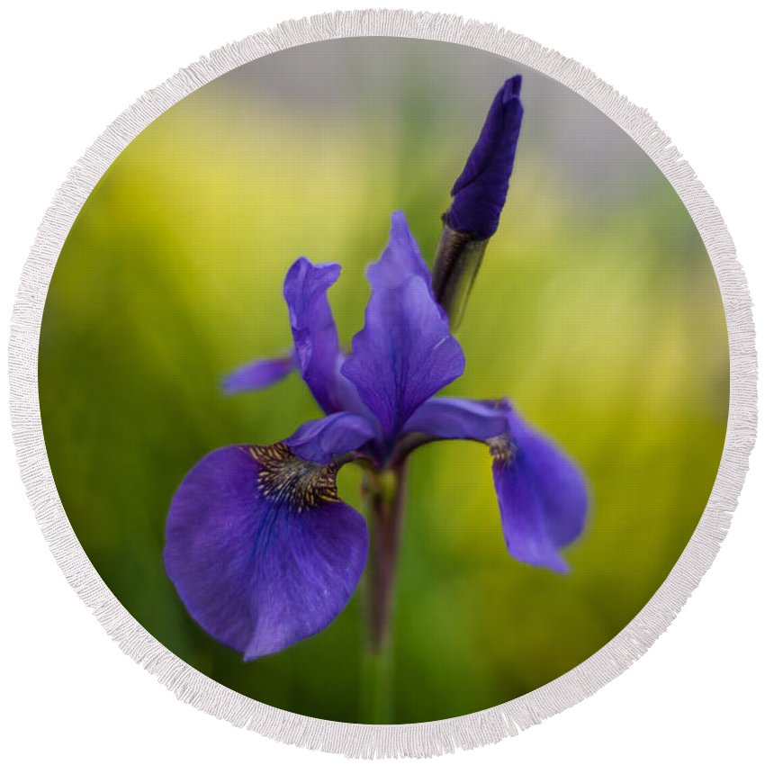 Iris Round Beach Towel featuring the photograph Delicate Japanese Iris by Mike Reid