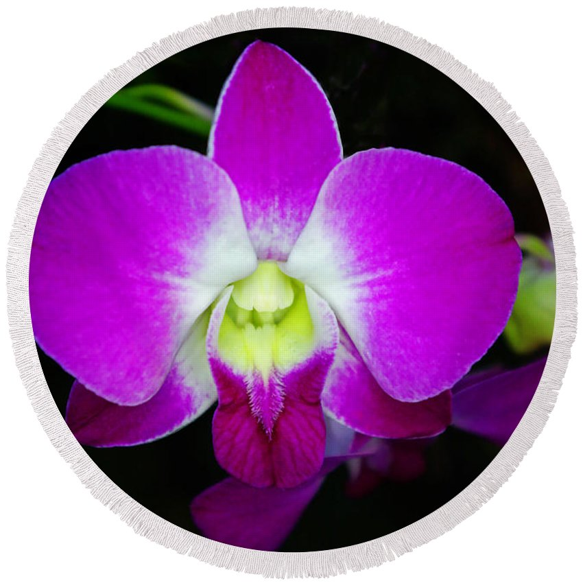 Orchids Round Beach Towel featuring the photograph Dendrobium Orchid by Rich Walter