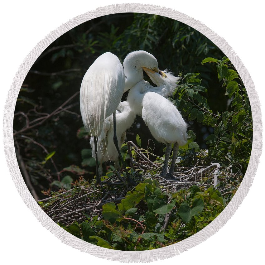 Egret Round Beach Towel featuring the photograph Dental Care by Dale Powell