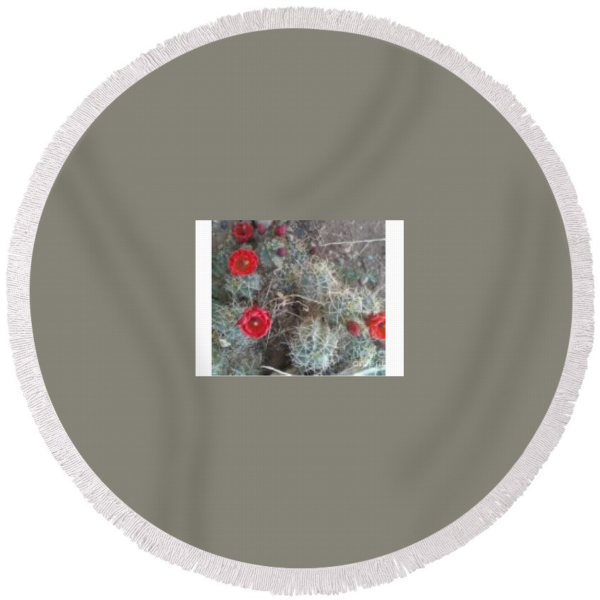 Desert Round Beach Towel featuring the photograph Desert Cactus by Frederick Holiday