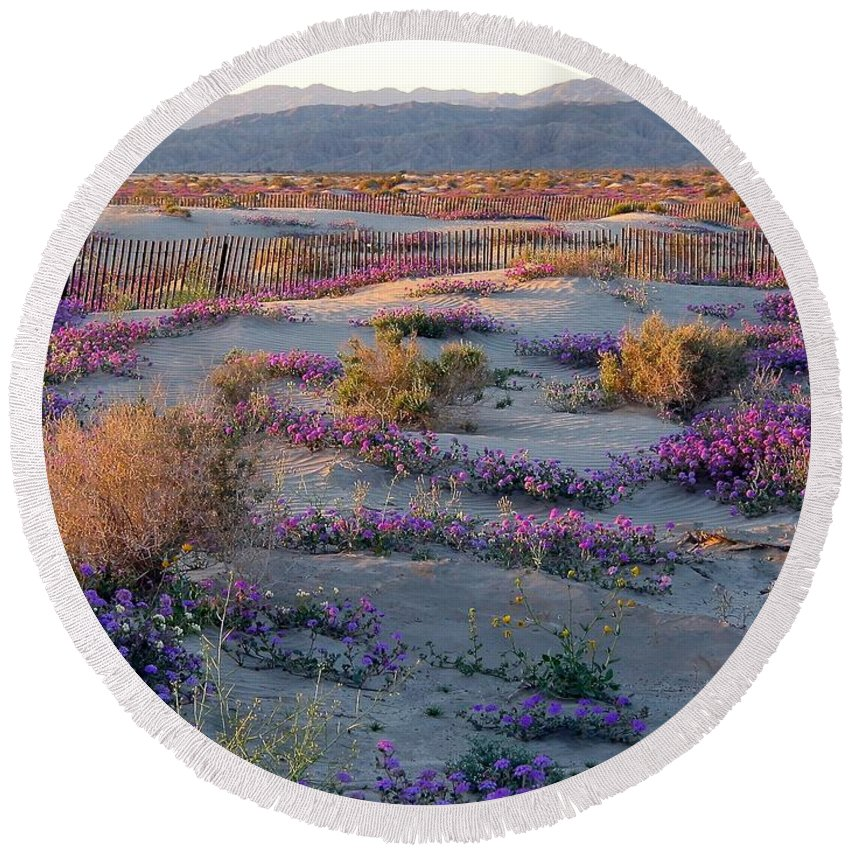 Southern California Desert Round Beach Towel featuring the photograph Desert In Bloom by Phyllis Kaltenbach