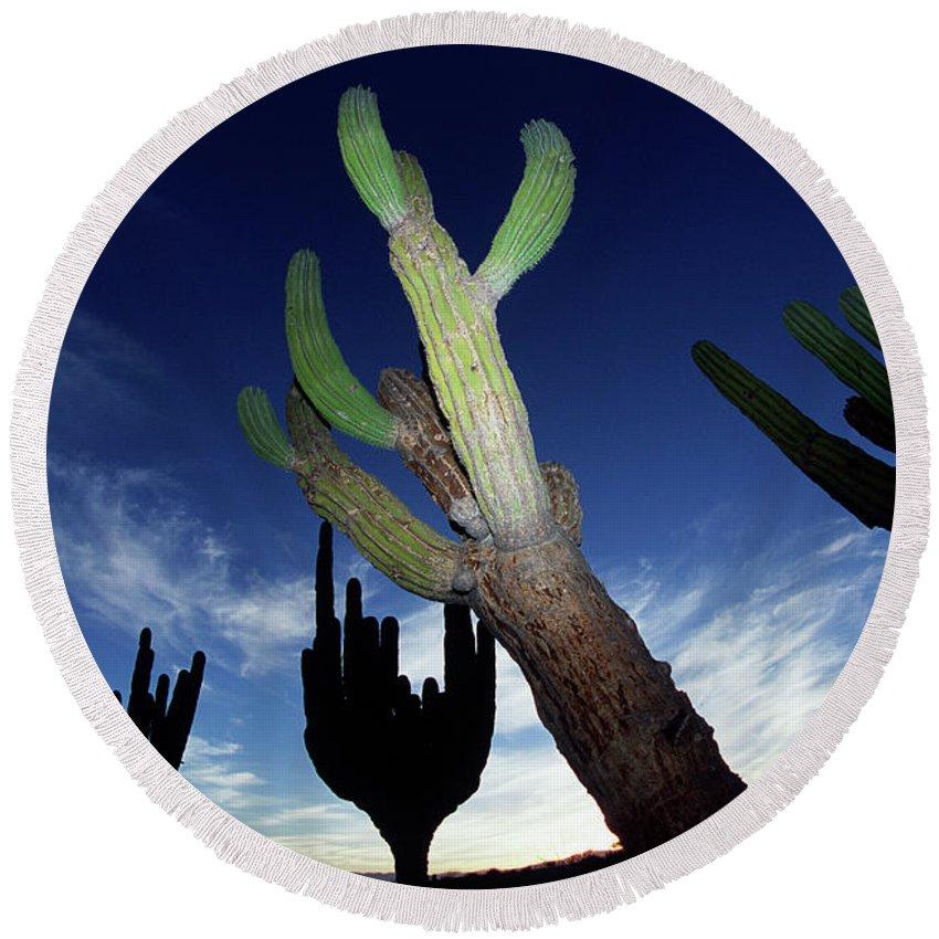Cactus Round Beach Towel featuring the photograph Desert Landscape by Richard Hallman
