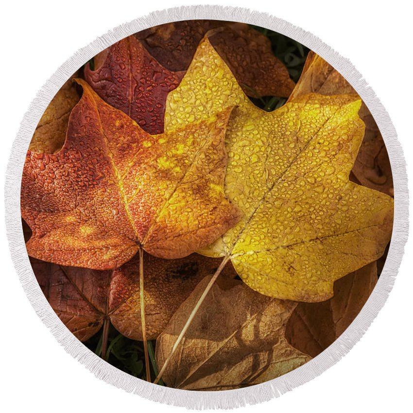 Leaf Round Beach Towel featuring the photograph Dew On Autumn Leaves by Scott Norris