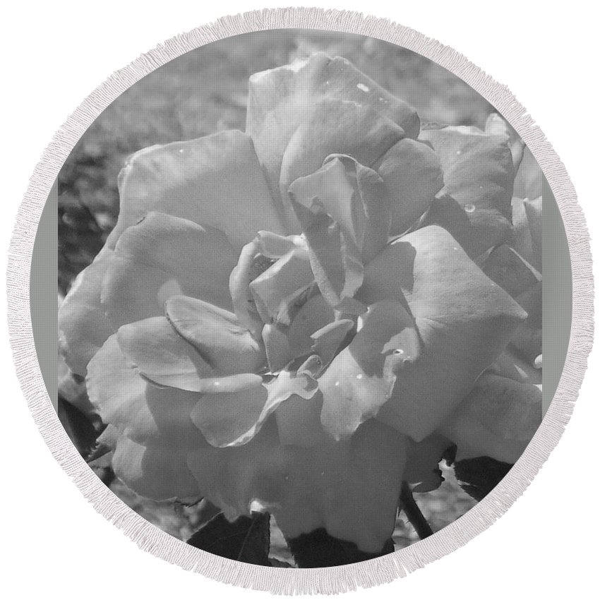 Rose Round Beach Towel featuring the photograph Dew Rose by Pharris Art