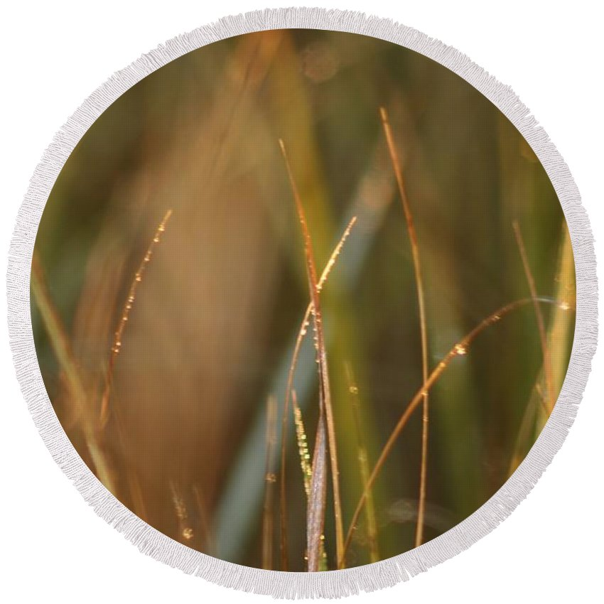 Dew Round Beach Towel featuring the photograph Dewy Grasses by Nadine Rippelmeyer