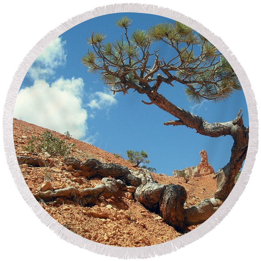 Joshua Tree Round Beach Towel featuring the photograph Digging In by J Allen