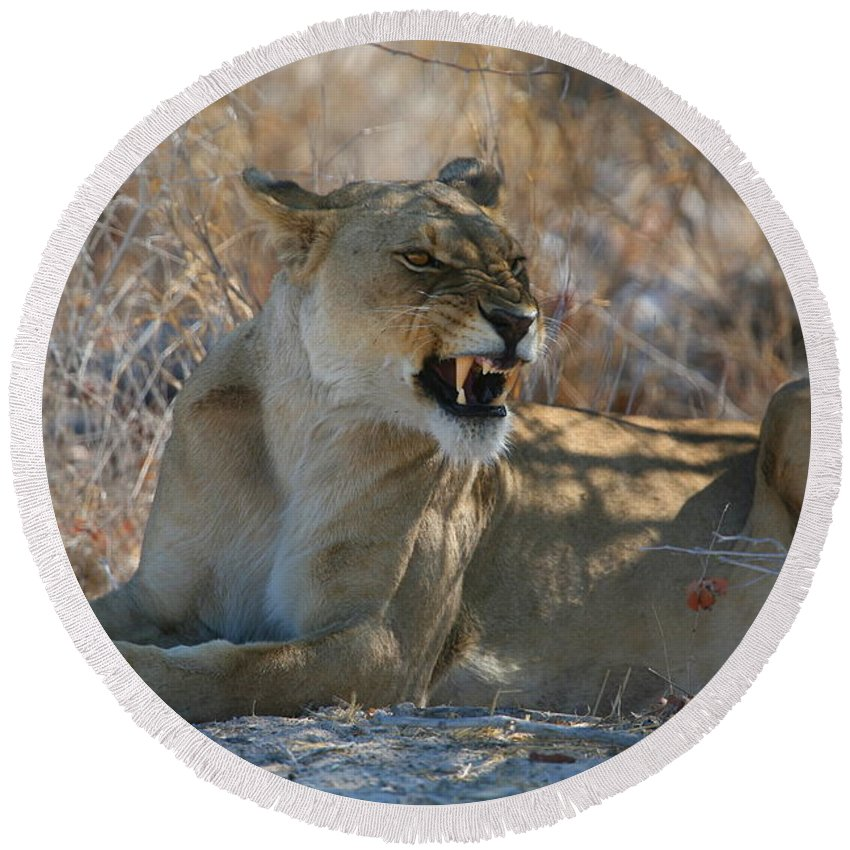 Lion Round Beach Towel featuring the photograph Disgruntled Lioness by Bruce J Robinson