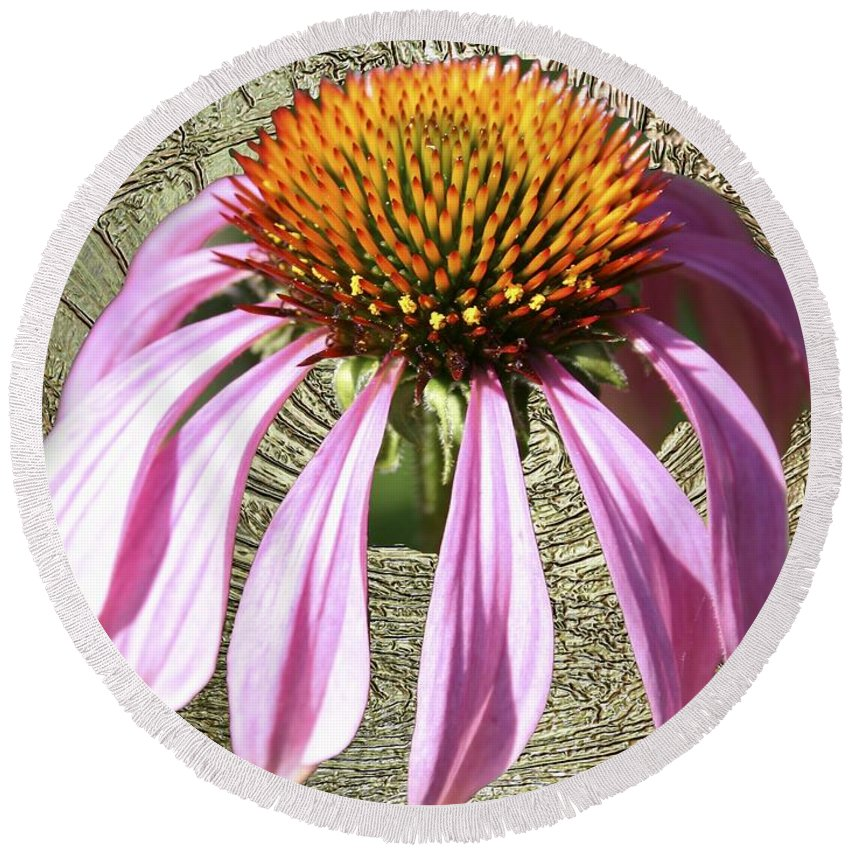 Divinity Gold Round Beach Towel featuring the photograph Divinity Gold - Echinacea by Richard Thomas