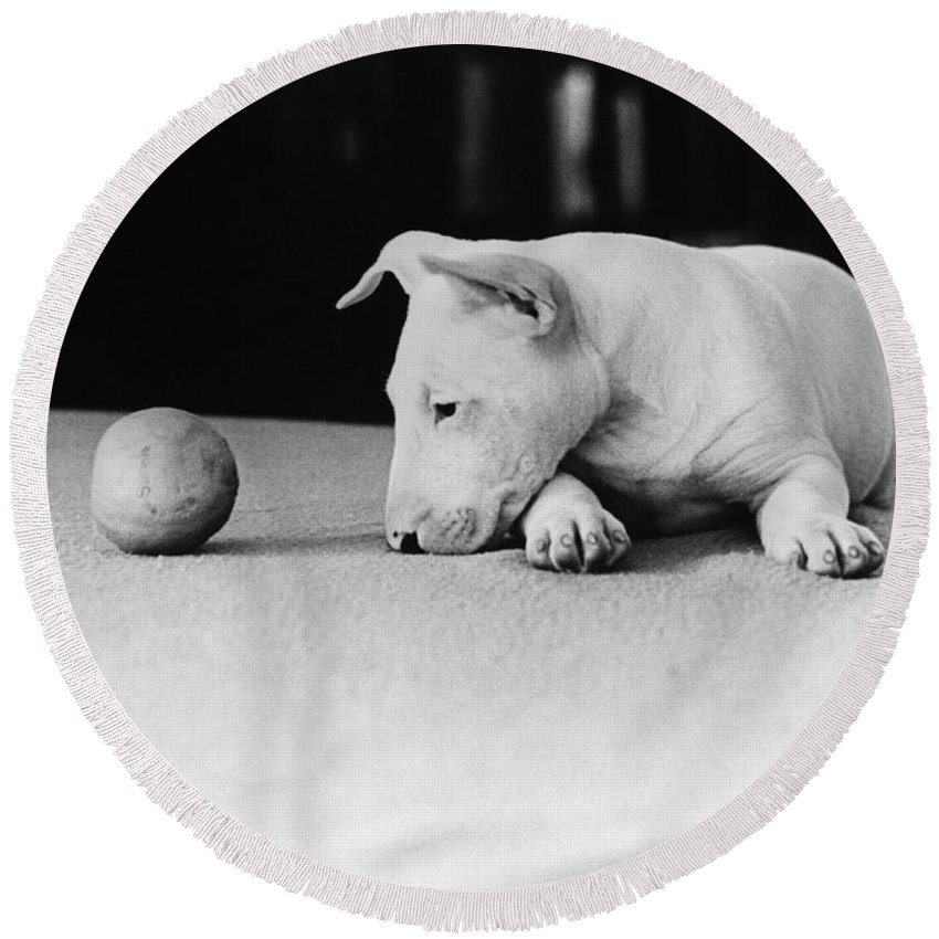 Animal Round Beach Towel featuring the photograph Dog And Ball by Guy Gillette