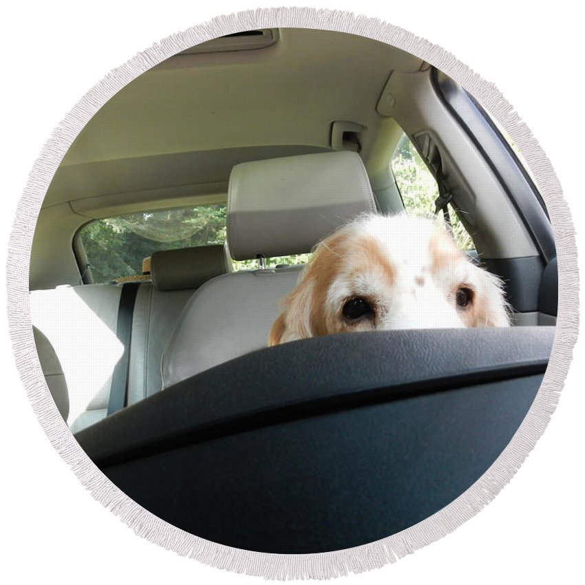 Dog Round Beach Towel featuring the photograph Dog Driving A Car by Mats Silvan