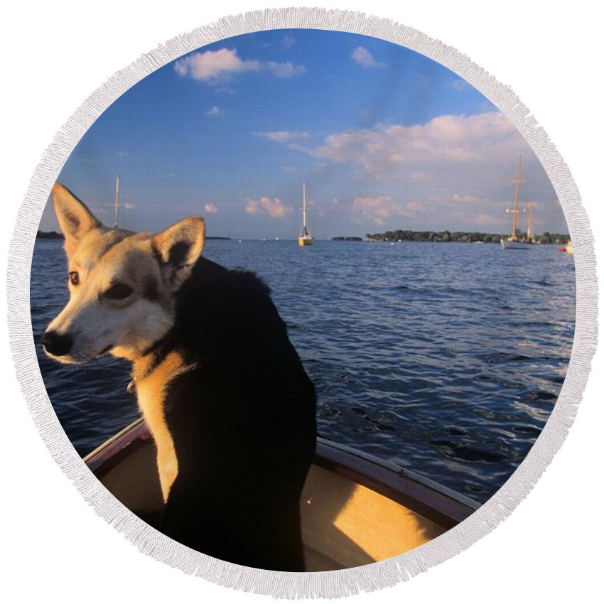 Pib Round Beach Towel featuring the photograph Dog In A Dingy At Put-in-bay Harbor by John Harmon