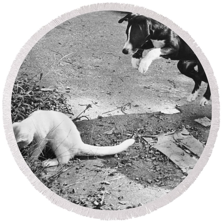 Animal Round Beach Towel featuring the photograph Dog Jumping On An Unsuspecting Kitten by Lynn Lennon