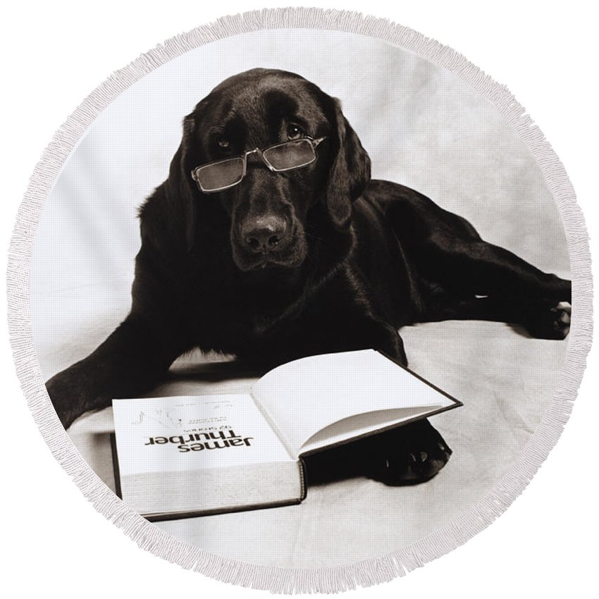 Animal Round Beach Towel featuring the photograph Dog Reading James Thurber by Frederica Georgia