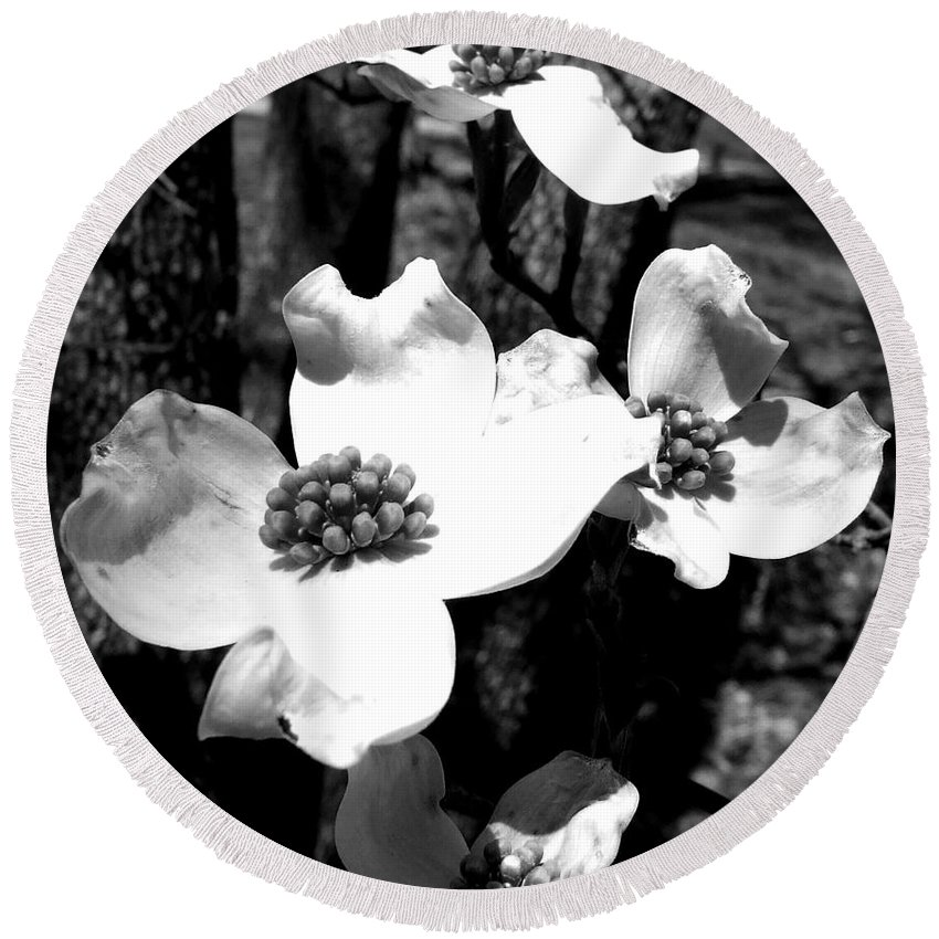 Dogwood Round Beach Towel featuring the photograph Dogwood 3 by Andrea Anderegg