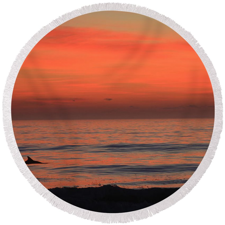 Ocean Round Beach Towel featuring the photograph Dolphin At Cape Hatteras by Mountains to the Sea Photo