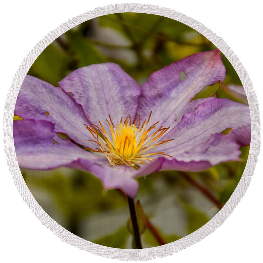 Purple Round Beach Towel featuring the photograph Donna's Purple Flower by Thomas Woolworth