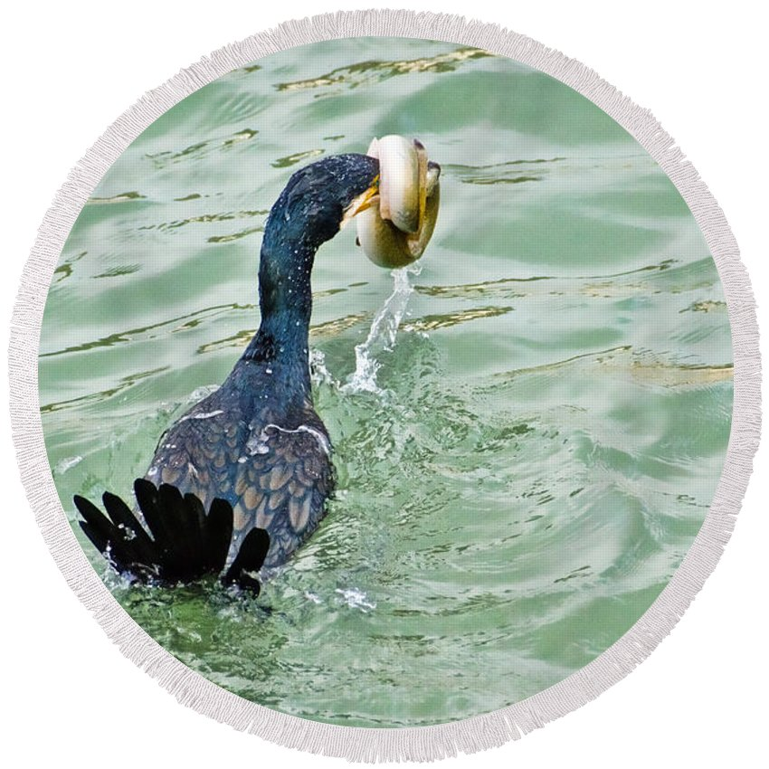 Cormorant Round Beach Towel featuring the photograph Don't Ever Give Up by Susie Peek