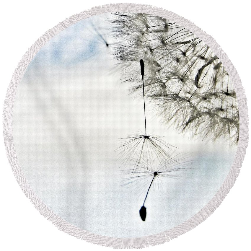 Dandelion Round Beach Towel featuring the photograph Don't Let Me Fall by Marianna Mills