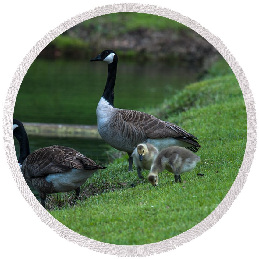 Geese Round Beach Towel featuring the photograph Down By The River by Dale Powell