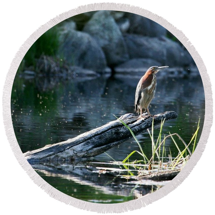 Green Heron Round Beach Towel featuring the photograph Down Time by Teresa McGill