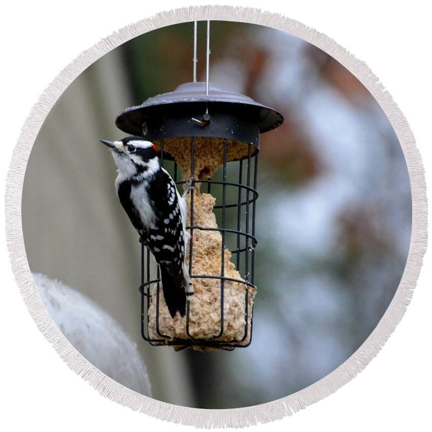 Profile Round Beach Towel featuring the photograph Downy Woodpecker by Lisa Kilby