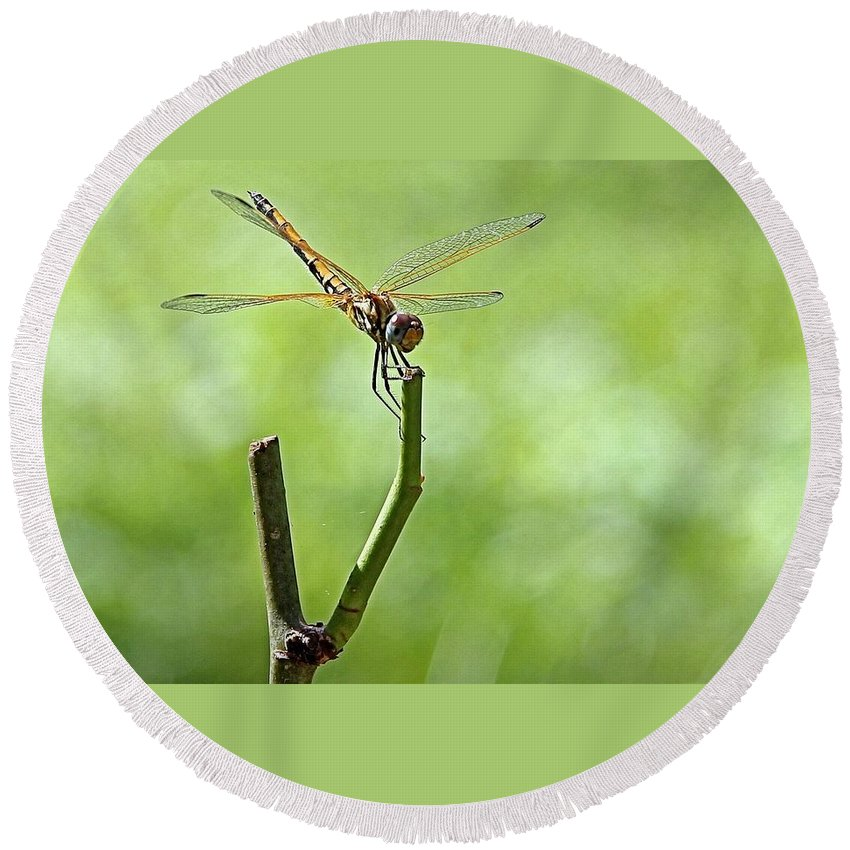 Dragon Fly Round Beach Towel featuring the photograph Dragon Fly by Martin Michael Pflaum